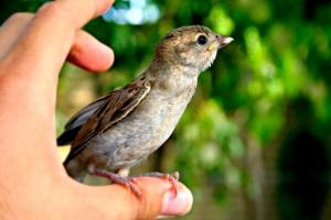 photo oiseau sur un pouce sur la route de la résilience LynnePion