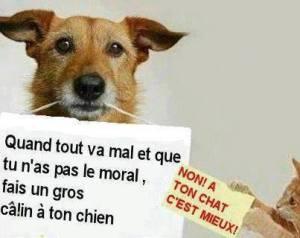 fais un câlin à ton chien!