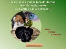 Citation animaux sont parfois des médicaments deuil animalier