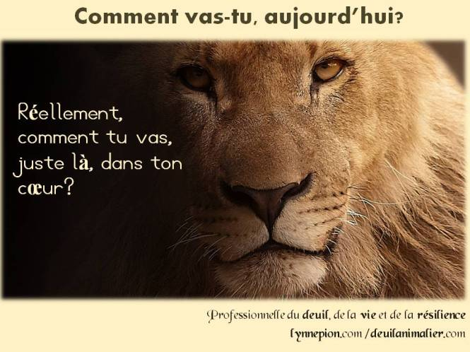Citations 2016 lion comment vas-tu